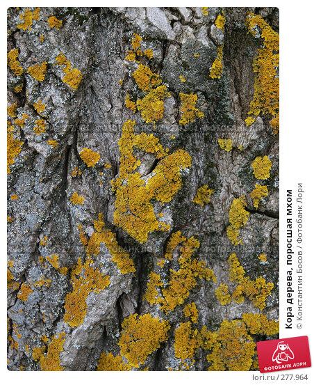 Кора дерева, поросшая мхом, фото № 277964, снято 26 марта 2017 г. (c) Константин Босов / Фотобанк Лори