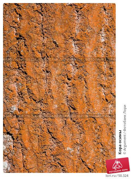Купить «Кора осины», фото № 50324, снято 1 апреля 2007 г. (c) Argument / Фотобанк Лори