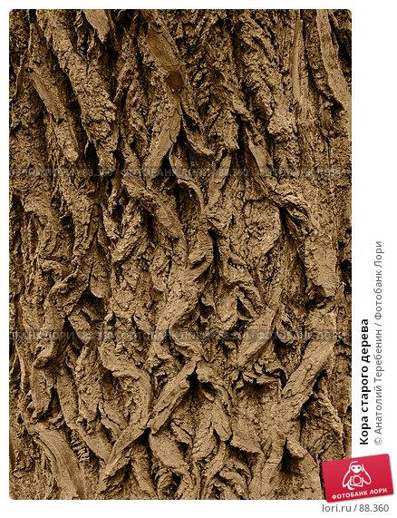 Кора старого дерева, фото № 88360, снято 18 сентября 2007 г. (c) Анатолий Теребенин / Фотобанк Лори