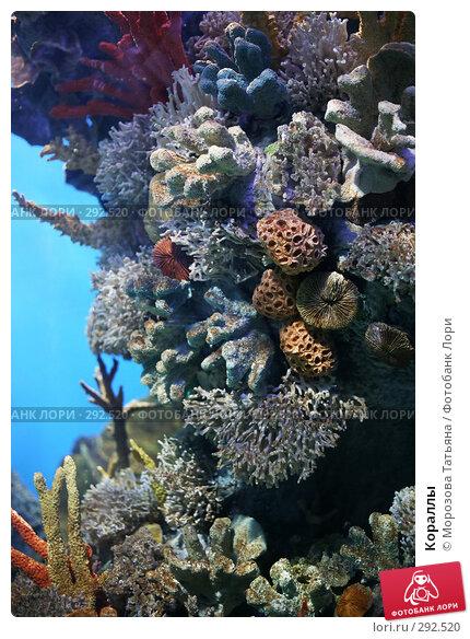 Купить «Кораллы», фото № 292520, снято 20 апреля 2008 г. (c) Морозова Татьяна / Фотобанк Лори