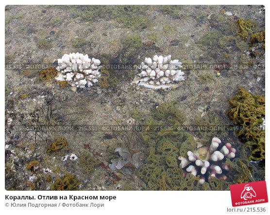 Кораллы. Отлив на Красном море, фото № 215536, снято 20 марта 2007 г. (c) Юлия Селезнева / Фотобанк Лори