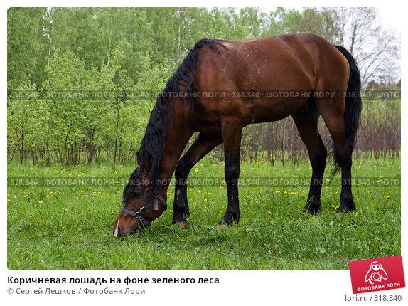 Коричневая лошадь на фоне зеленого леса, фото № 318340, снято 18 мая 2008 г. (c) Сергей Лешков / Фотобанк Лори