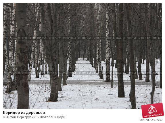 Коридор из деревьев, фото № 230532, снято 19 января 2008 г. (c) Антон Перегрузкин / Фотобанк Лори