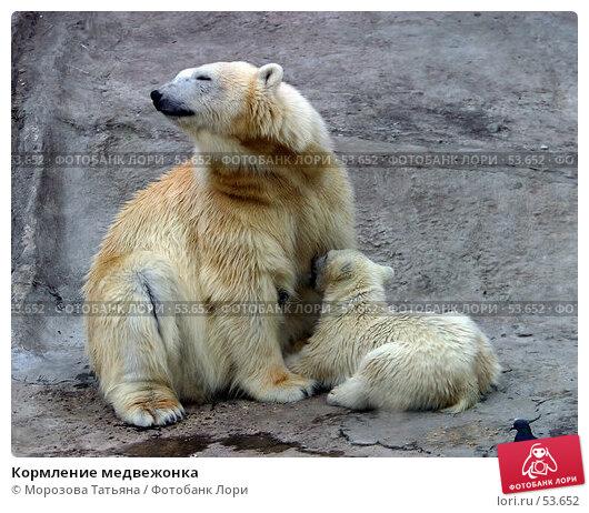 Кормление медвежонка, фото № 53652, снято 29 апреля 2004 г. (c) Морозова Татьяна / Фотобанк Лори