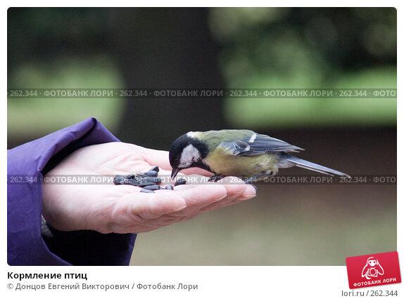 Купить «Кормление птиц», фото № 262344, снято 16 апреля 2008 г. (c) Донцов Евгений Викторович / Фотобанк Лори