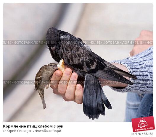 Купить «Кормление птиц хлебом с рук», фото № 63184, снято 23 июня 2007 г. (c) Юрий Синицын / Фотобанк Лори