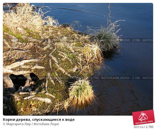 Купить «Корни дерева, спускающиеся к воде», фото № 2780, снято 30 апреля 2006 г. (c) Маргарита Лир / Фотобанк Лори