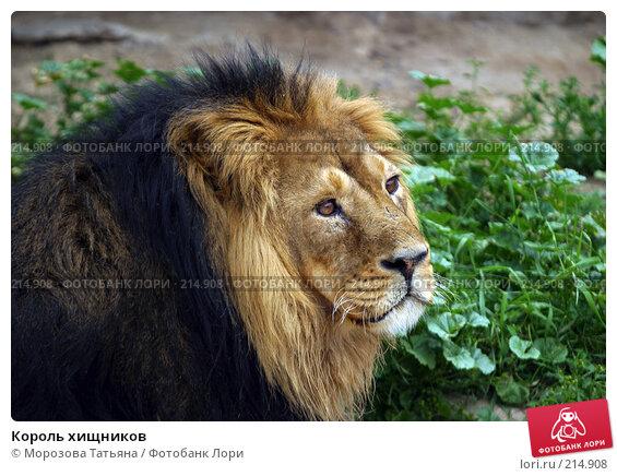 Король хищников, фото № 214908, снято 9 июля 2005 г. (c) Морозова Татьяна / Фотобанк Лори