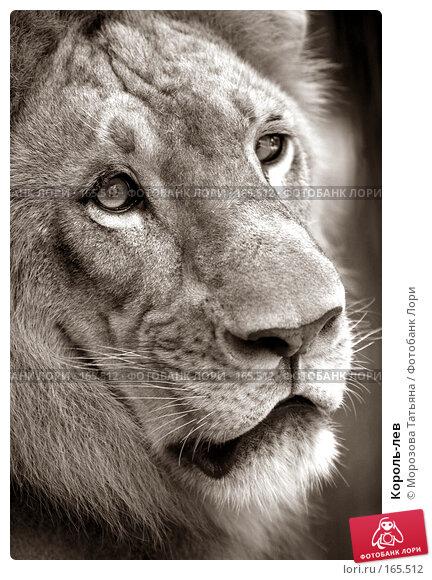 Король-лев, фото № 165512, снято 23 октября 2007 г. (c) Морозова Татьяна / Фотобанк Лори