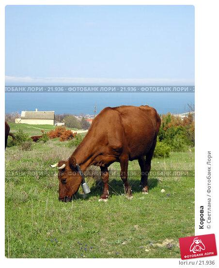 Корова, фото № 21936, снято 15 апреля 2006 г. (c) Светлана / Фотобанк Лори