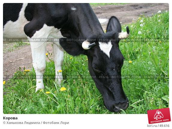 Купить «Корова», фото № 49616, снято 28 мая 2007 г. (c) Ханыкова Людмила / Фотобанк Лори