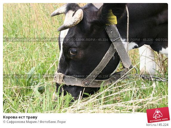 Купить «Корова ест траву», фото № 45224, снято 7 июля 2005 г. (c) Сафронова Мария / Фотобанк Лори