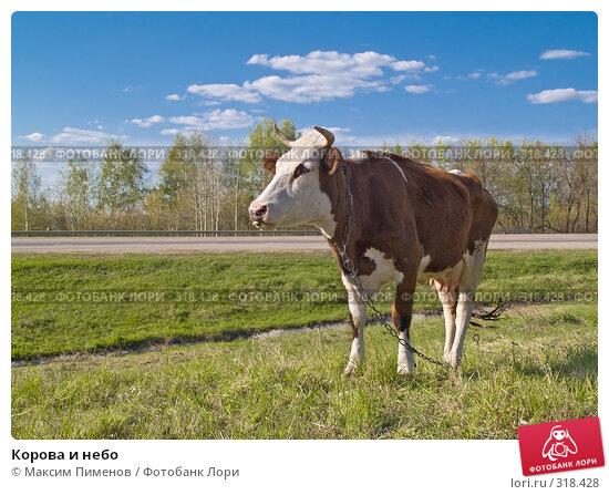 Корова и небо, фото № 318428, снято 27 апреля 2008 г. (c) Максим Пименов / Фотобанк Лори