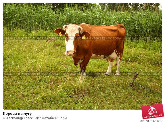 Корова на лугу, фото № 166612, снято 23 июня 2007 г. (c) Александр Телеснюк / Фотобанк Лори
