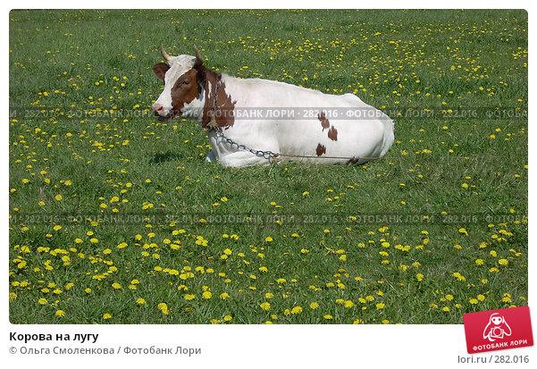 Корова на лугу, фото № 282016, снято 12 мая 2008 г. (c) Ольга Смоленкова / Фотобанк Лори
