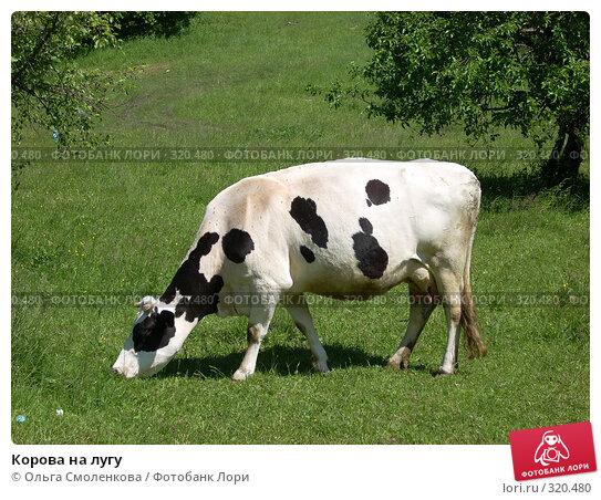 Корова на лугу, фото № 320480, снято 7 июня 2008 г. (c) Ольга Смоленкова / Фотобанк Лори