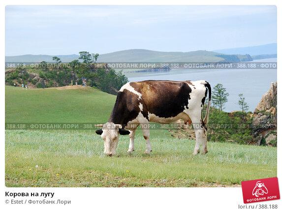 Корова на лугу. Стоковое фото, фотограф Estet / Фотобанк Лори