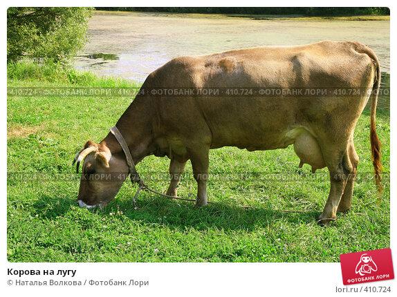 Купить «Корова на лугу», фото № 410724, снято 17 августа 2008 г. (c) Наталья Волкова / Фотобанк Лори