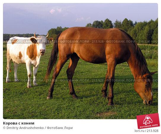 Корова с конем, фото № 213928, снято 18 августа 2007 г. (c) Dmitriy Andrushchenko / Фотобанк Лори