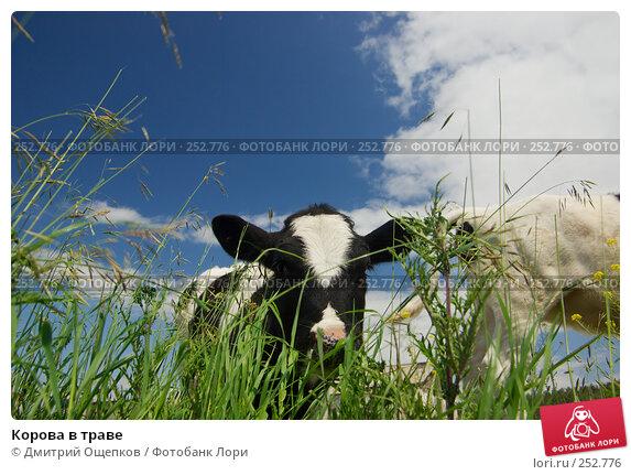 Корова в траве, фото № 252776, снято 25 июня 2007 г. (c) Дмитрий Ощепков / Фотобанк Лори