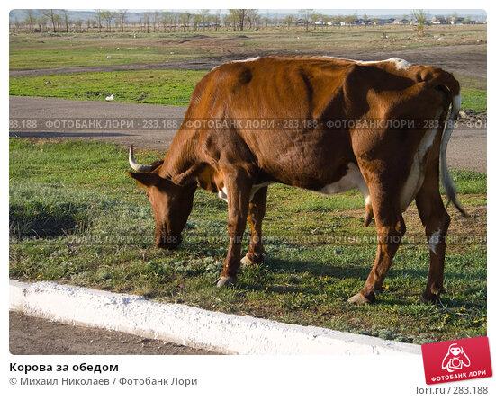 Корова за обедом, фото № 283188, снято 13 мая 2008 г. (c) Михаил Николаев / Фотобанк Лори