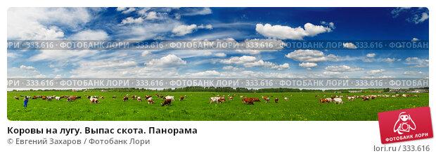 Коровы на лугу. Выпас скота. Панорама, фото № 333616, снято 28 мая 2008 г. (c) Евгений Захаров / Фотобанк Лори