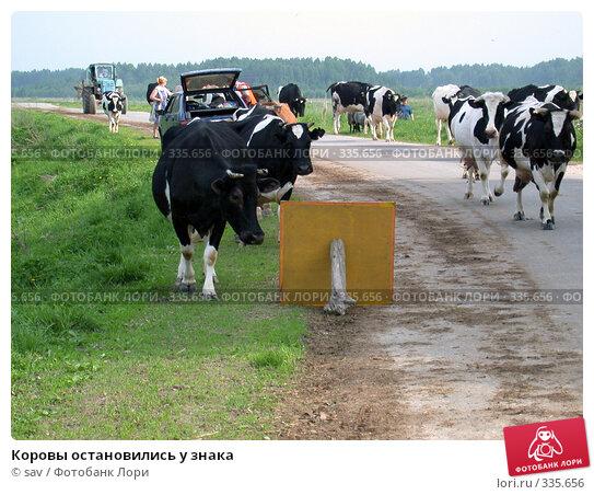 Коровы остановились у знака, фото № 335656, снято 21 мая 2005 г. (c) sav / Фотобанк Лори