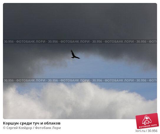 Коршун среди туч и облаков, фото № 30956, снято 28 июля 2006 г. (c) Сергей Ксейдор / Фотобанк Лори