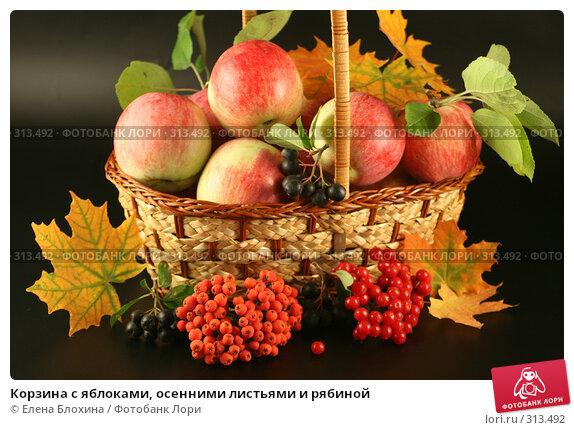 Корзина с яблоками, осенними листьями и рябиной, фото № 313492, снято 13 сентября 2007 г. (c) Елена Блохина / Фотобанк Лори