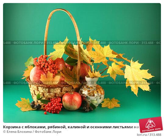 Корзина с яблоками, рябиной, калиной и осенними листьями на зеленом фоне, фото № 313488, снято 13 сентября 2007 г. (c) Елена Блохина / Фотобанк Лори