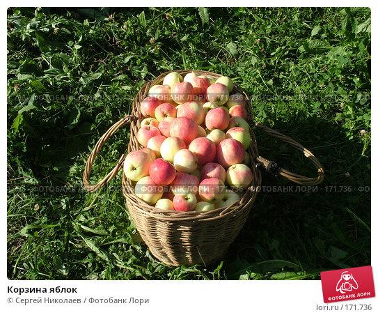 Корзина яблок, фото № 171736, снято 25 августа 2007 г. (c) Сергей Николаев / Фотобанк Лори