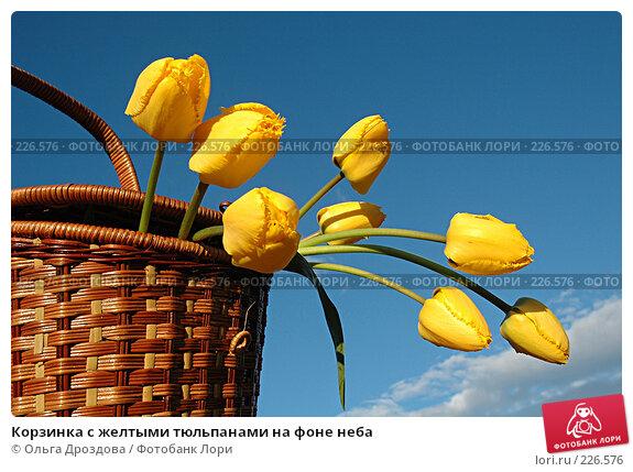 Корзинка с желтыми тюльпанами на фоне неба, фото № 226576, снято 14 мая 2005 г. (c) Ольга Дроздова / Фотобанк Лори