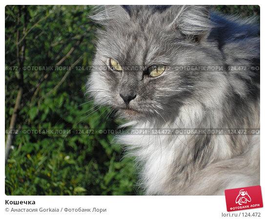 Кошечка, фото № 124472, снято 2 июня 2007 г. (c) Анастасия Gorkaia / Фотобанк Лори