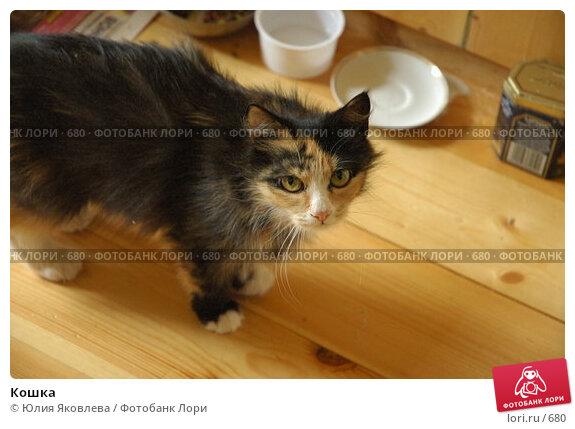 Кошка, фото № 680, снято 28 июня 2005 г. (c) Юлия Яковлева / Фотобанк Лори