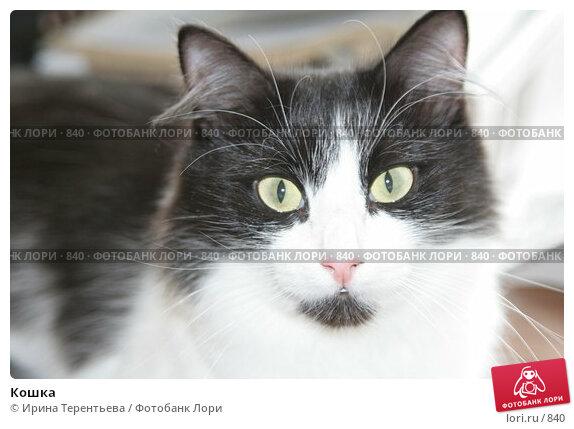 Кошка, эксклюзивное фото № 840, снято 29 июля 2005 г. (c) Ирина Терентьева / Фотобанк Лори