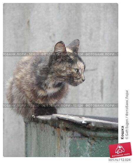 Кошка, фото № 12024, снято 7 августа 2006 г. (c) Gaft Eugen / Фотобанк Лори