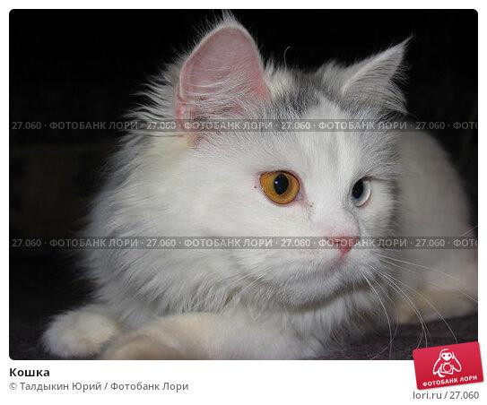 Кошка, фото № 27060, снято 11 декабря 2006 г. (c) Талдыкин Юрий / Фотобанк Лори