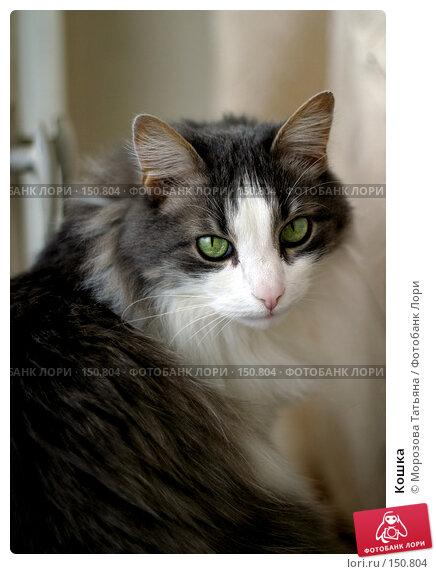 Кошка, фото № 150804, снято 16 мая 2004 г. (c) Морозова Татьяна / Фотобанк Лори