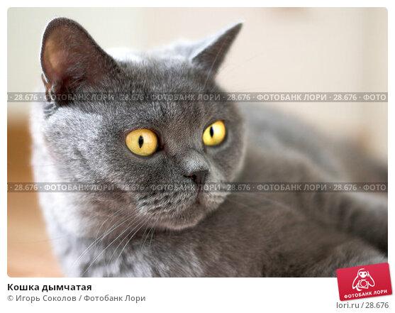 Кошка дымчатая, фото № 28676, снято 13 мая 2006 г. (c) Игорь Соколов / Фотобанк Лори