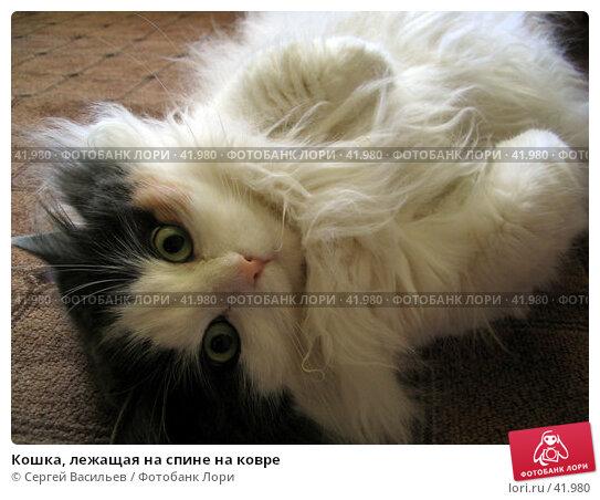 Кошка, лежащая на спине на ковре, фото № 41980, снято 9 июля 2006 г. (c) Сергей Васильев / Фотобанк Лори