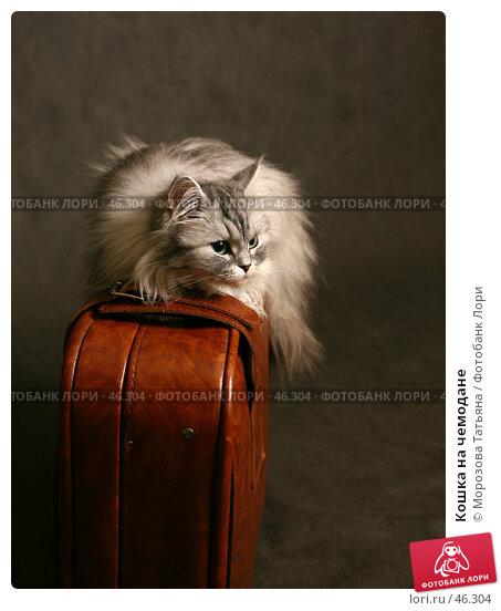 Купить «Кошка на чемодане», фото № 46304, снято 24 декабря 2006 г. (c) Морозова Татьяна / Фотобанк Лори