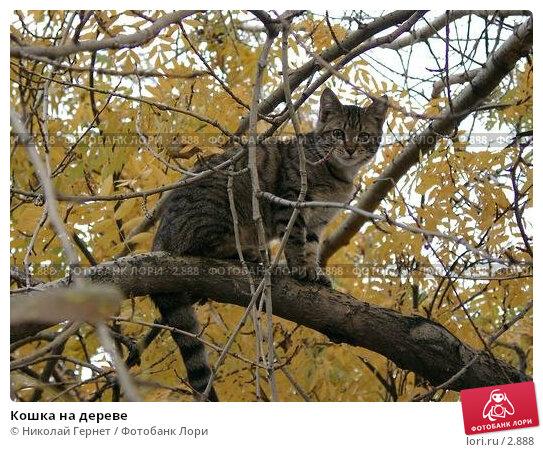 Кошка на дереве, фото № 2888, снято 28 сентября 2003 г. (c) Николай Гернет / Фотобанк Лори