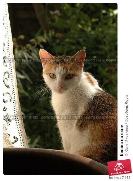 Кошка на окне, фото № 7152, снято 9 августа 2006 г. (c) Юлия Яковлева / Фотобанк Лори