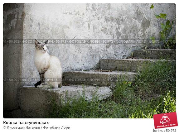 Кошка на ступеньках, фото № 50972, снято 4 июня 2007 г. (c) Лисовская Наталья / Фотобанк Лори