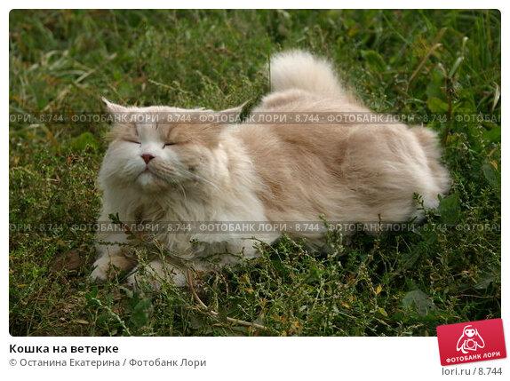 Кошка на ветерке, фото № 8744, снято 27 августа 2005 г. (c) Останина Екатерина / Фотобанк Лори