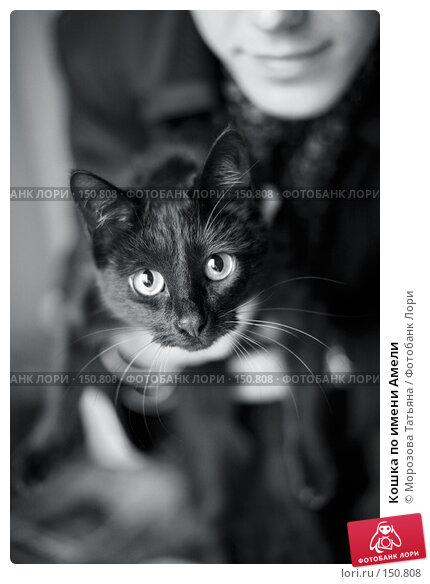 Кошка по имени Амели, фото № 150808, снято 3 ноября 2006 г. (c) Морозова Татьяна / Фотобанк Лори