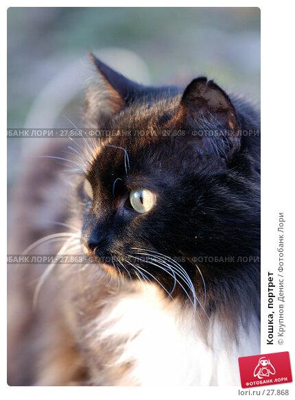 Кошка, портрет, фото № 27868, снято 20 февраля 2007 г. (c) Крупнов Денис / Фотобанк Лори