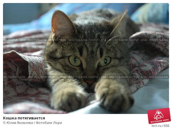 Кошка потягивается, фото № 656, снято 5 июля 2005 г. (c) Юлия Яковлева / Фотобанк Лори