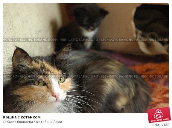 Кошка с котенком, фото № 660, снято 2 июня 2005 г. (c) Юлия Яковлева / Фотобанк Лори