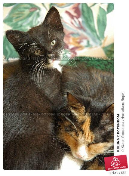 Кошка с котенком, фото № 664, снято 28 июня 2005 г. (c) Юлия Яковлева / Фотобанк Лори